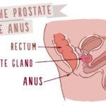 prostate, prostate massage
